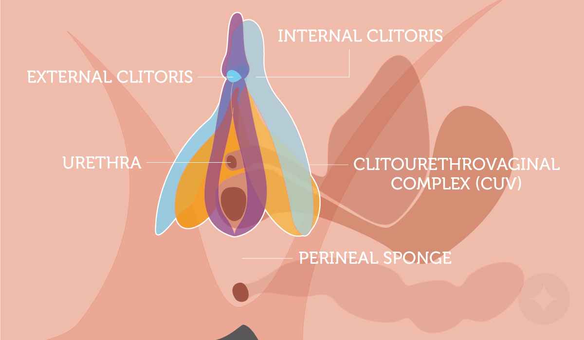 Sexual side effects: Learn about the clitourethrovaginal complex and how you could stimulate it to reclaim your sex life.