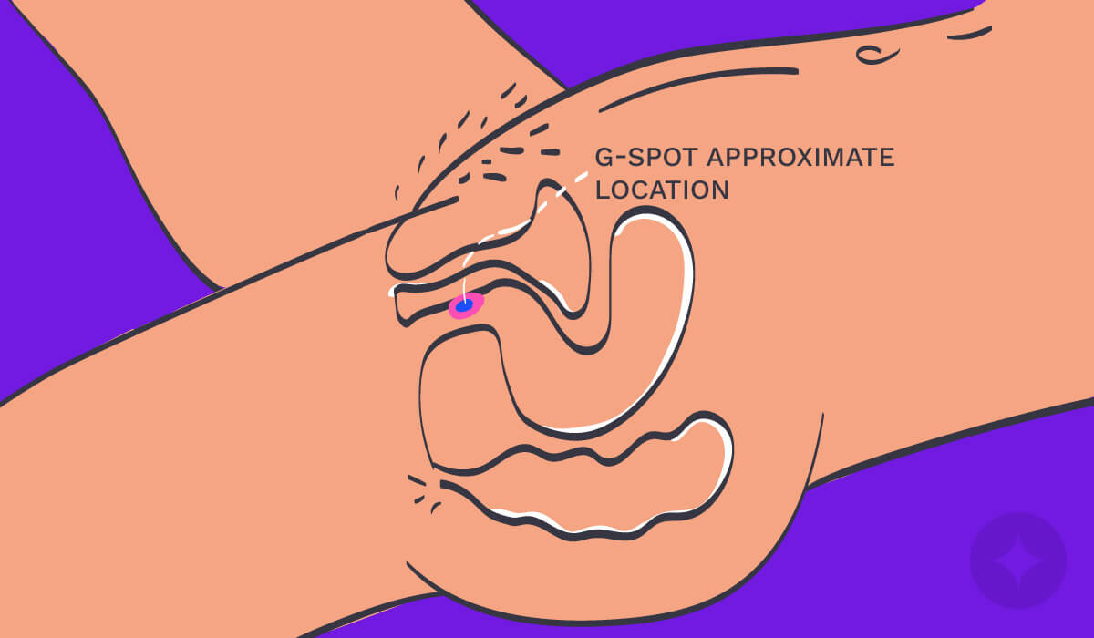 Vulva anatomy: A diagram showing the approximate location of the G-Spot.