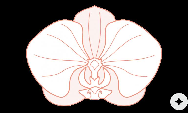 Vulva Anatomy 101